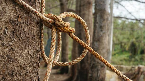 rope with knot around brown tree trunk - noeud dans le bois photos et images de collection