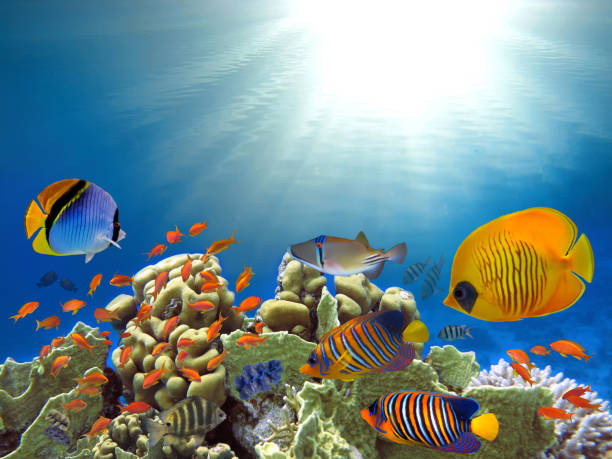 ropical fishes and corals reef in ocean stock photo
