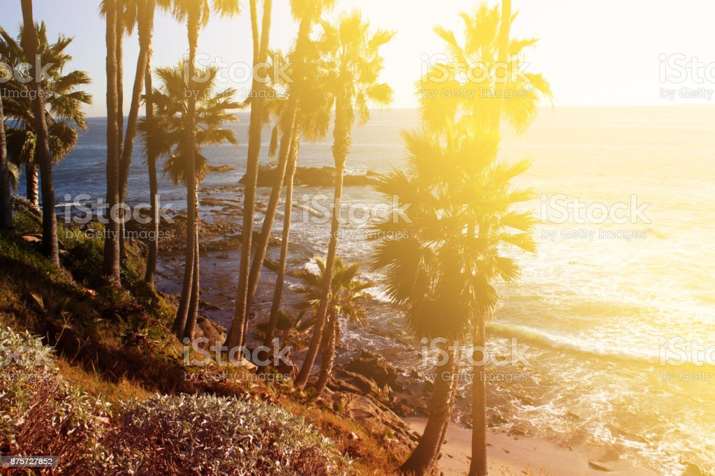 ropical landscape with palms. stock photo