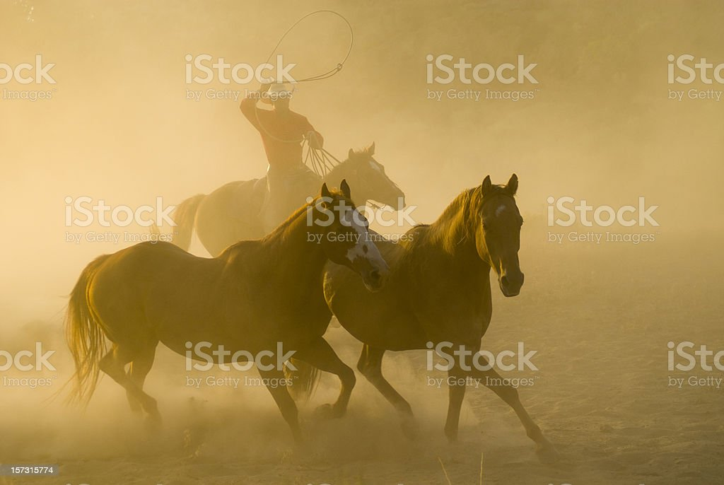 Roping cowboy, arm raised,chasing two horses-backlit dust stock photo