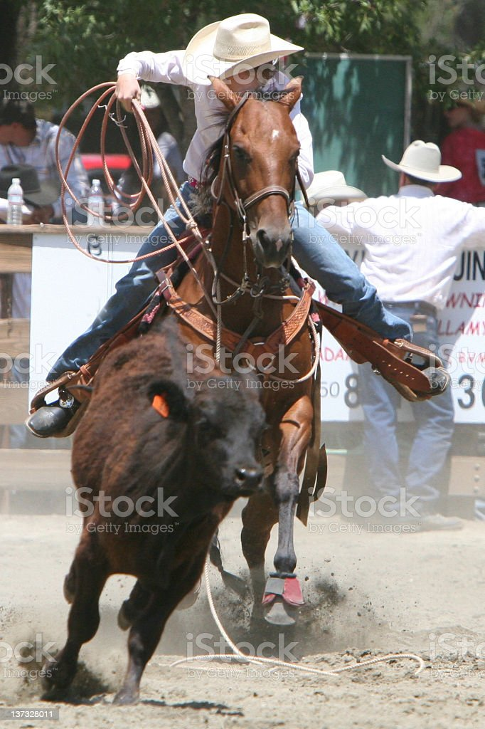 Roping the Calf stock photo