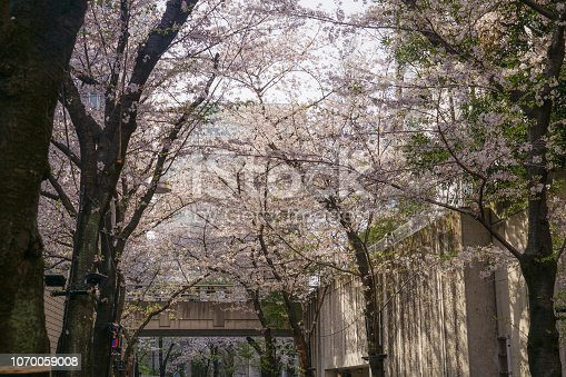825525754istockphoto Roppongi 1-chome of cherry tree-lined 1070059008