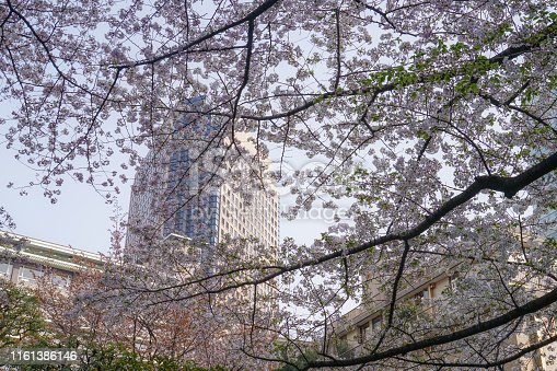 825525754istockphoto Roppongi 1-chome of cherry tree-lined 1161386146