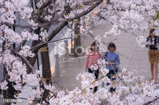 825525754istockphoto Roppongi 1-chome of cherry tree-lined 1161386169