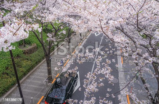 825525754istockphoto Roppongi 1-chome of cherry tree-lined 1161386175