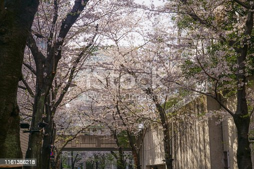 825525754istockphoto Roppongi 1-chome of cherry tree-lined 1161386218