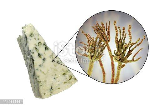 Roquefort cheese and fungi Penicillium roqueforti, used in its production, photo and 3D illustration