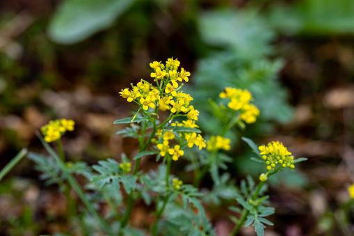 flowers captured in Bohinj valley Slovenia