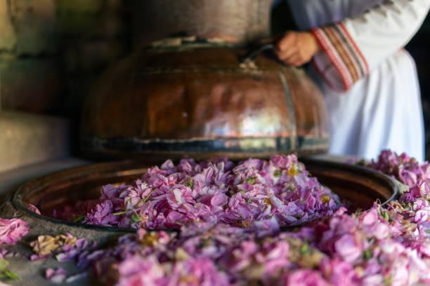 rosa damascena. die saison der ätherisch erzeugend, ist jetzt. die fülle der berühmten bulgarischen rose ist in ihrem höhepunkt. - destillationsturm stock-fotos und bilder