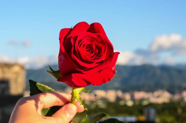 Rosa rugosaroseflower picture id917251360?b=1&k=6&m=917251360&s=612x612&w=0&h=e9ppnuqb9faqxmfyojkx2hkatqlmvggxjvbvyj24yia=