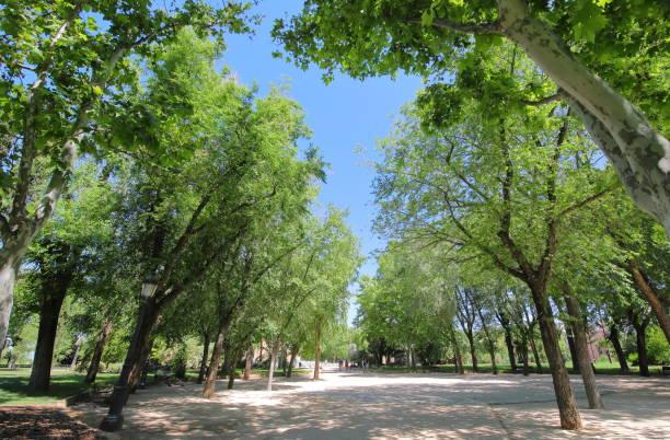 Rosaleda park garden Madrid Spain stock photo