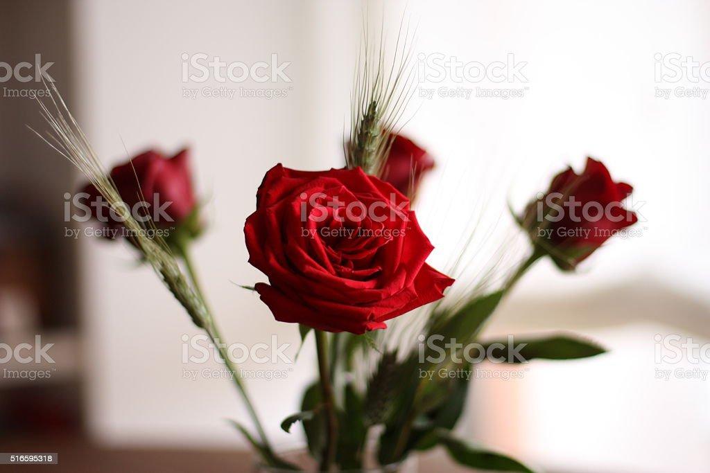 Rosas de Sant Jordi stock photo