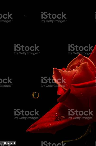 Rose and a drop picture id166127213?b=1&k=6&m=166127213&s=612x612&h=pxihme6gfnbwyqpt f1aaziwgpz3aowkccv05kt40l4=