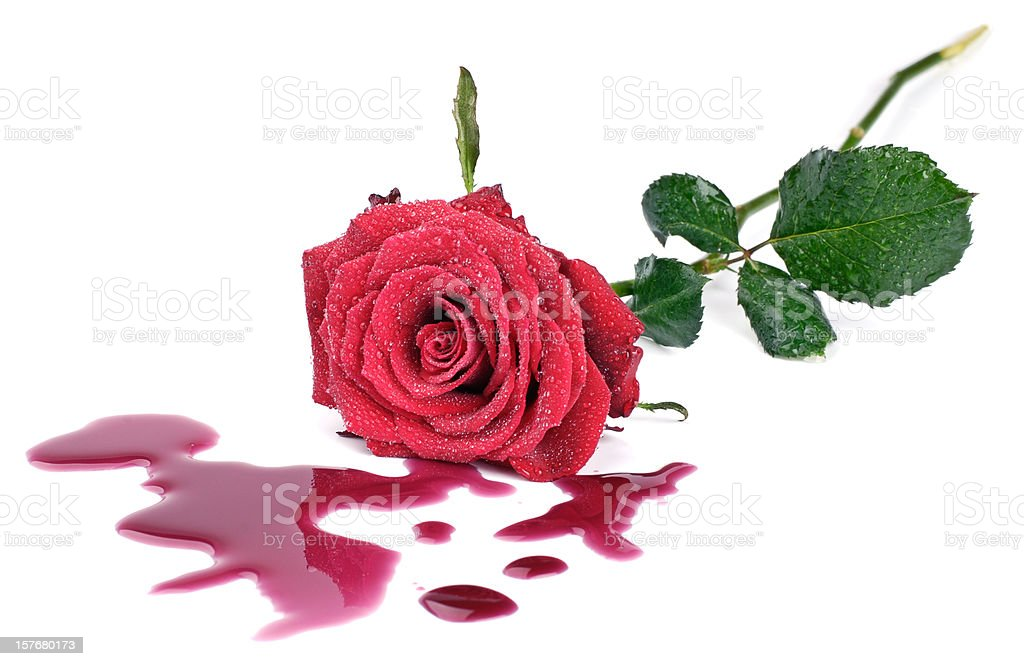 Rose and blood stock photo
