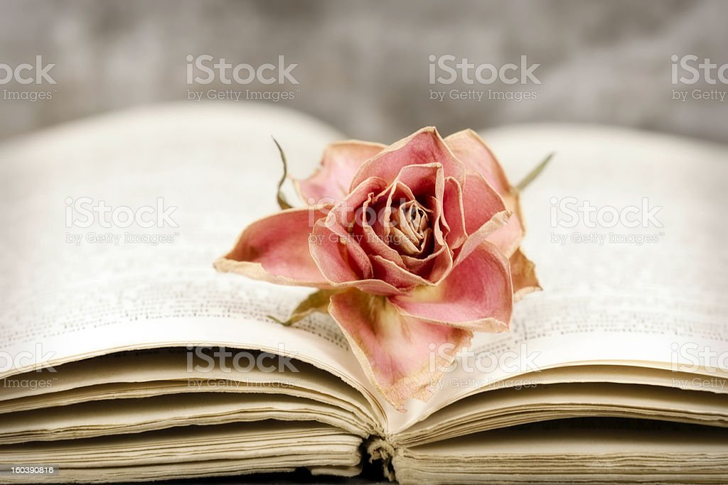 rose and book stock photo
