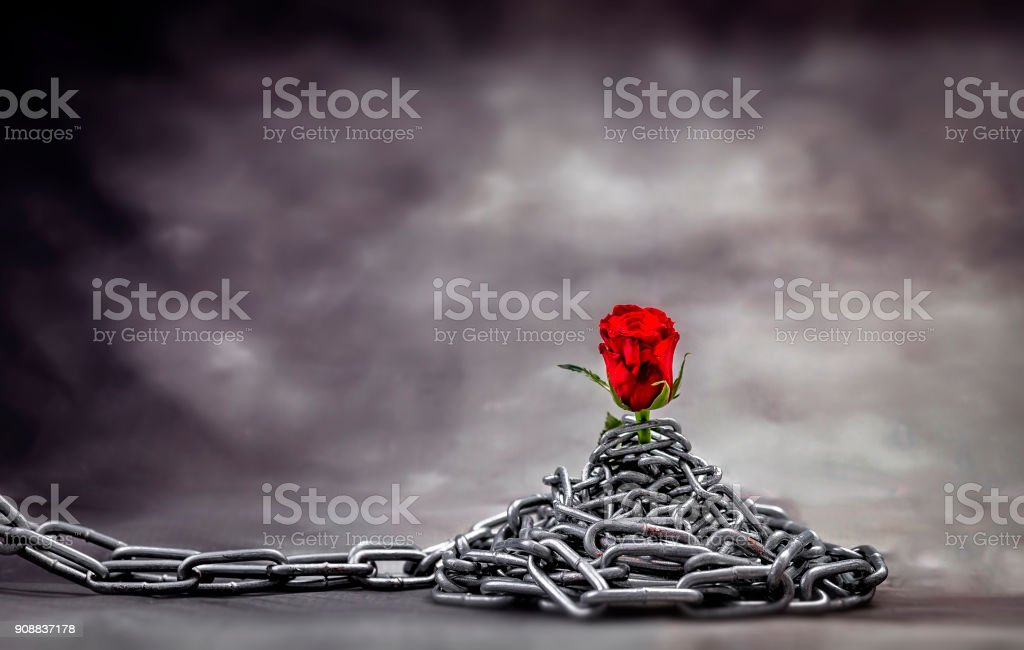 Rose and chain stock photo