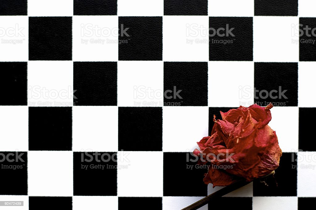 Rose and chess-board. stock photo