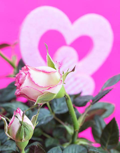 rose und herz - geburtstagswünsche mit bild stock-fotos und bilder