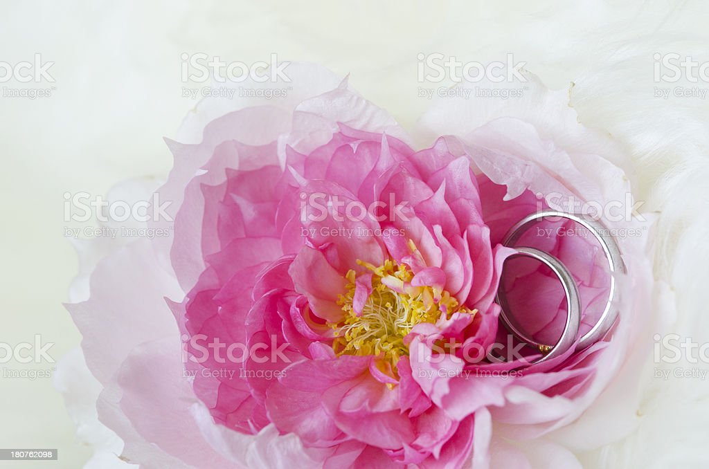 Rose and marriage ring royalty-free stock photo