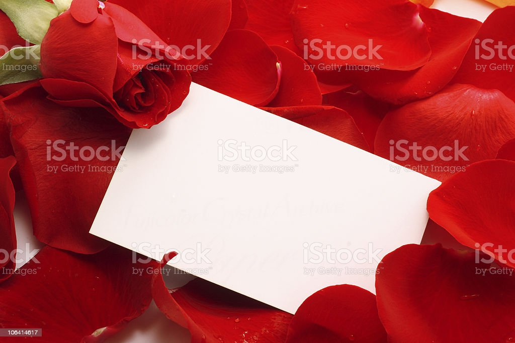 Rose and message on a petals. Background royalty-free stock photo