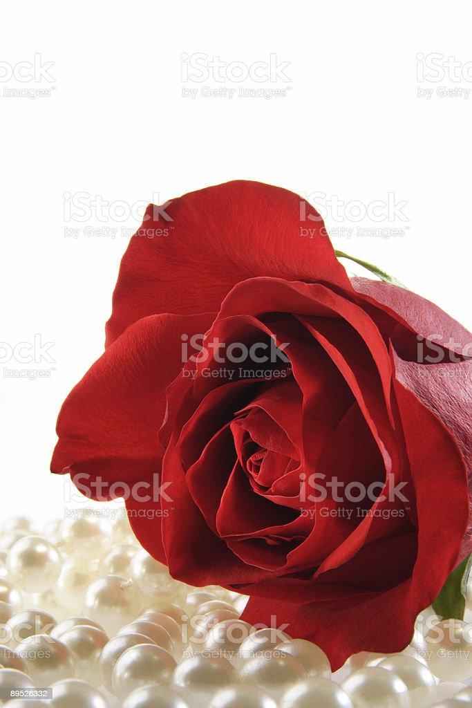 Rosa y perlas sobre blanco foto de stock libre de derechos