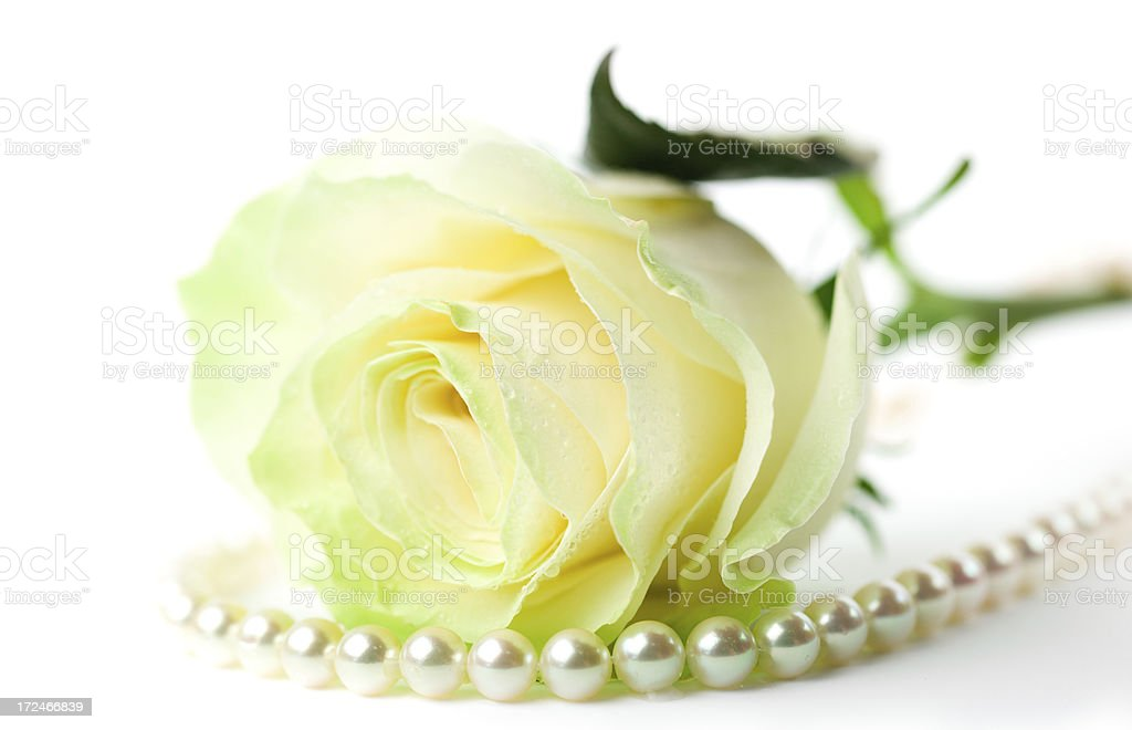 rose and pearls stock photo