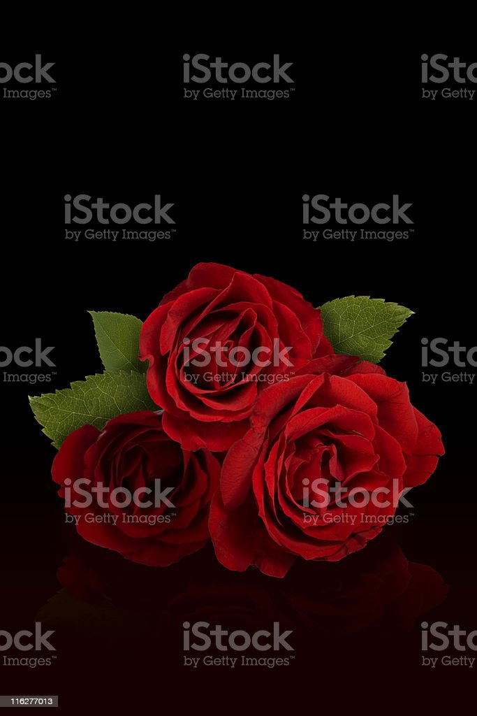 Rose and Romance stock photo