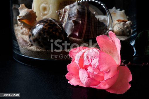 155139080istockphoto Rose and Shells 638968548