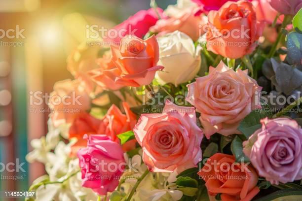 Rose and warm light in garden background picture id1145604197?b=1&k=6&m=1145604197&s=612x612&h=or0xgnkbj8lch0urvjebbm vs7htk6ywpfo53hcvk2u=