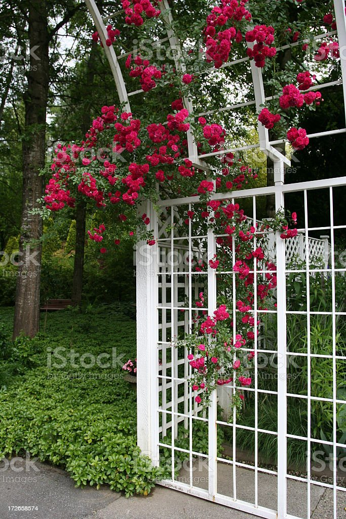 rose arbor royalty-free stock photo