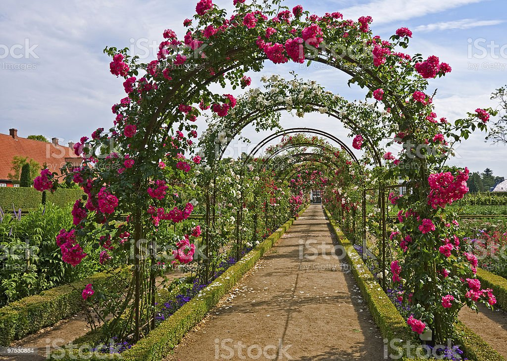 Rose archway stock photo