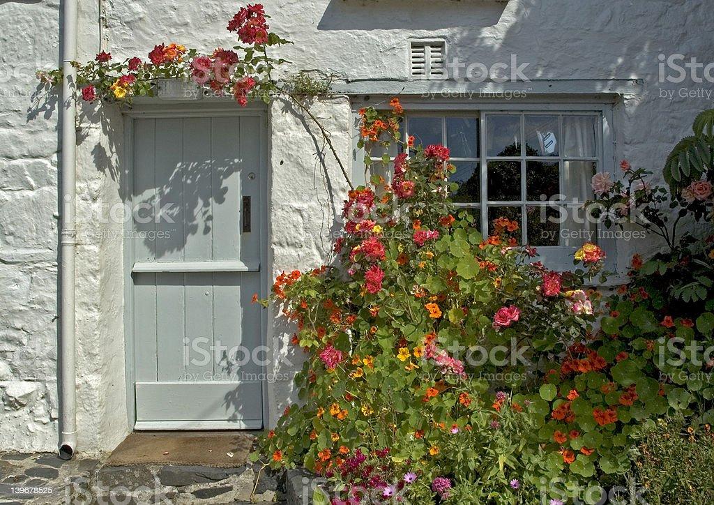 Rose around the Door royalty-free stock photo