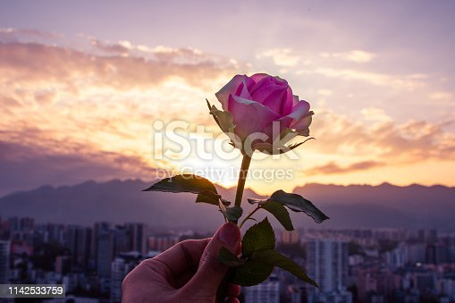 Hand holding rose at sunset