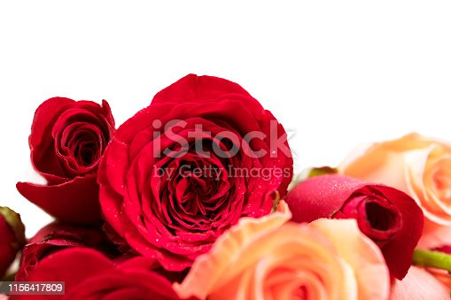 istock rose background for greeting cards or template or postcards 1156417809