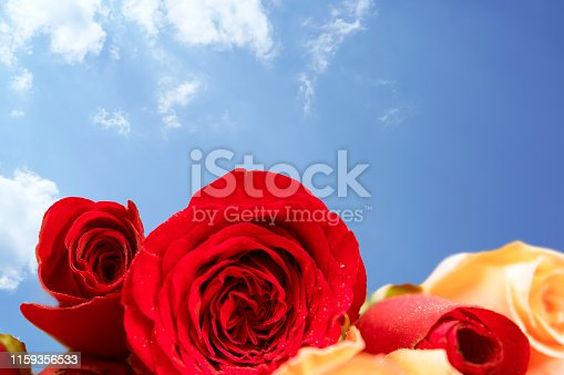 istock rose background for greeting cards or template or postcards 1159356533