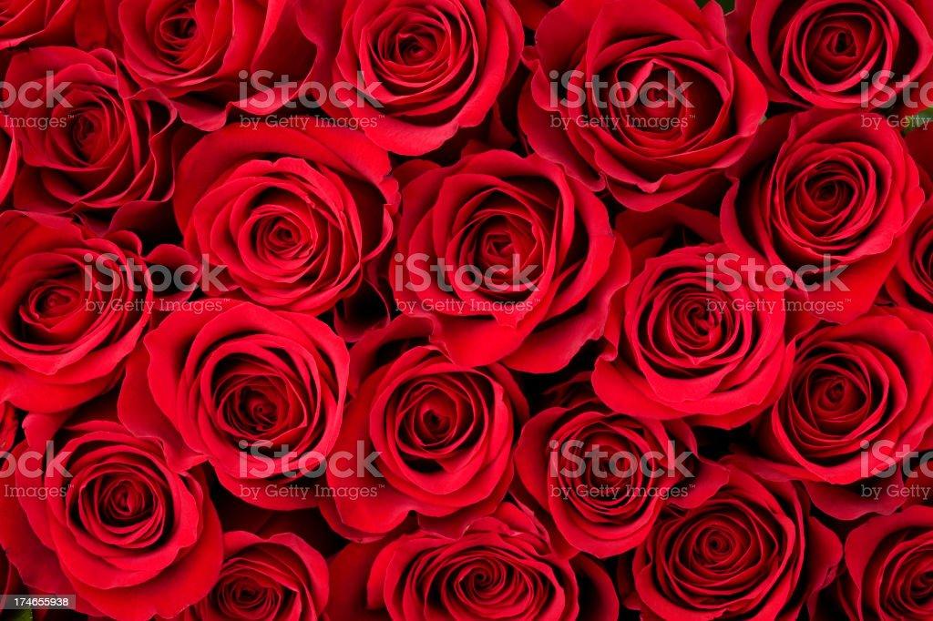 Rose Background  Anniversary Stock Photo