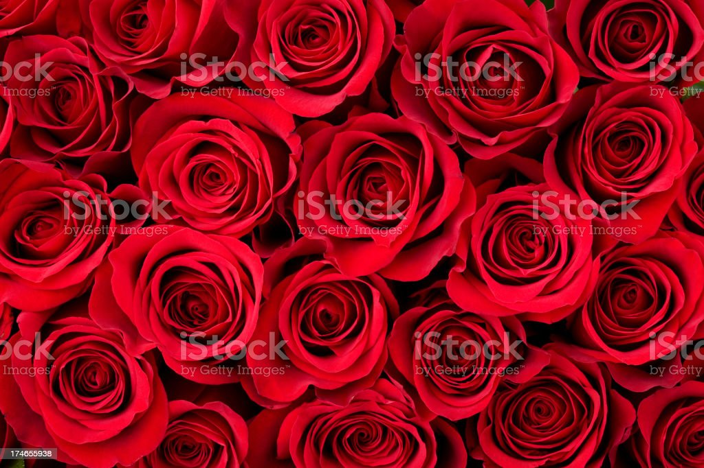 Rose Background
