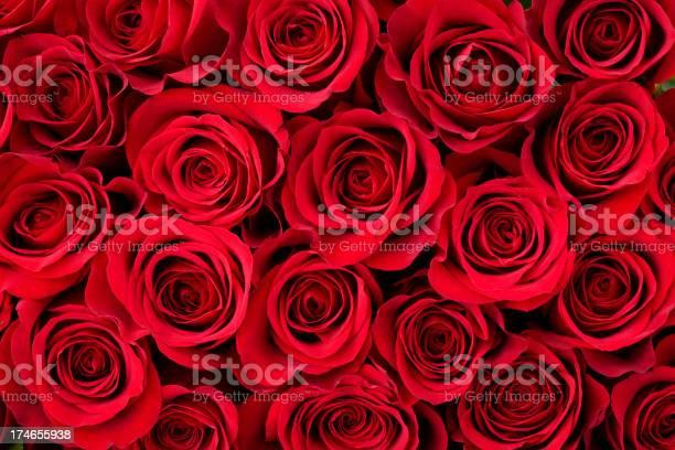 Photo of Rose Background