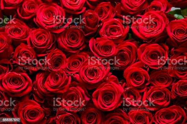 Rose background picture id688387642?b=1&k=6&m=688387642&s=612x612&h=4ctjmhbld4 dl hvqltrj2a4c0o3cumqyfa3vkjnapi=