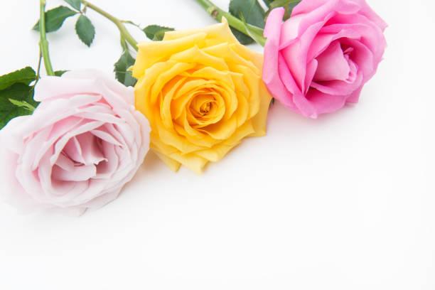 Rose background picture id984092848?b=1&k=6&m=984092848&s=612x612&w=0&h=o7e 8ohgplfegzuu2cibfr24qyyydfircfxbdq4zu e=