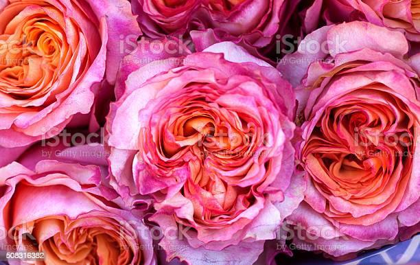 Rose backgrounds picture id508316382?b=1&k=6&m=508316382&s=612x612&h=upezyn2wendorw2gel1zhj5y524acz1ffpzxk6rqtrq=