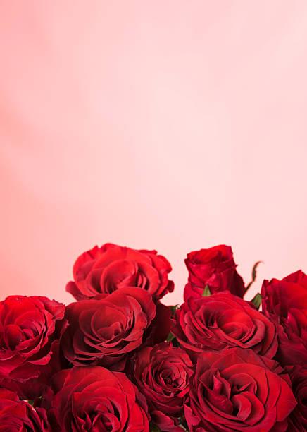 Rose border picture id114316905?b=1&k=6&m=114316905&s=612x612&w=0&h=s3ztif3obxylnol6el ofq271qv o jzwyny8rrrotk=