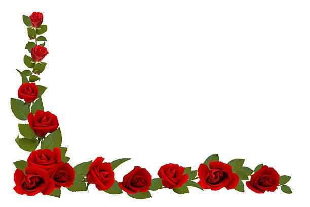 Rose border picture id116571034?b=1&k=6&m=116571034&s=612x612&w=0&h=va6z36p49uz7iah qbxbz mx5j  uae9i9syxn nafs=