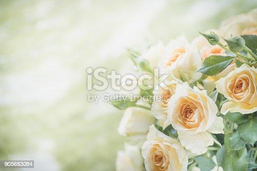 Rose bouquet toned image