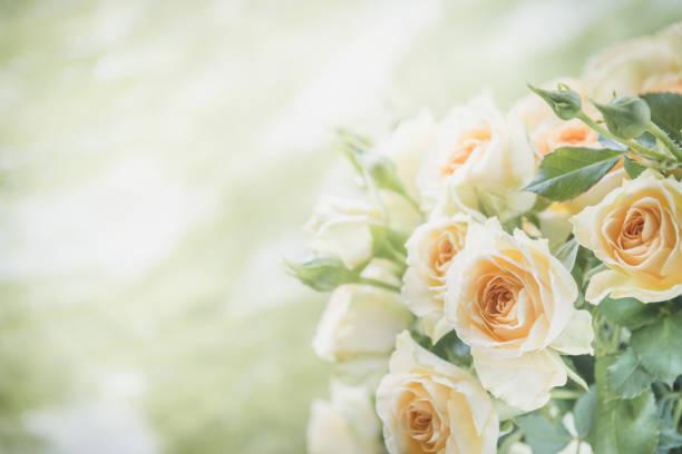 Rose bouquet toned image picture id905683084?b=1&k=6&m=905683084&s=612x612&w=0&h= 9im7vq20ta8qbdbtnydvkl36v6wsvufqk 6dv2 jdm=