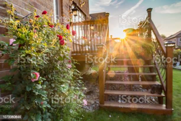 Rose bush on wooden fence picture id1073380844?b=1&k=6&m=1073380844&s=612x612&h=losfh 1mm6lsbbrdsv7guipd9ruw01ud ronphgj 3e=