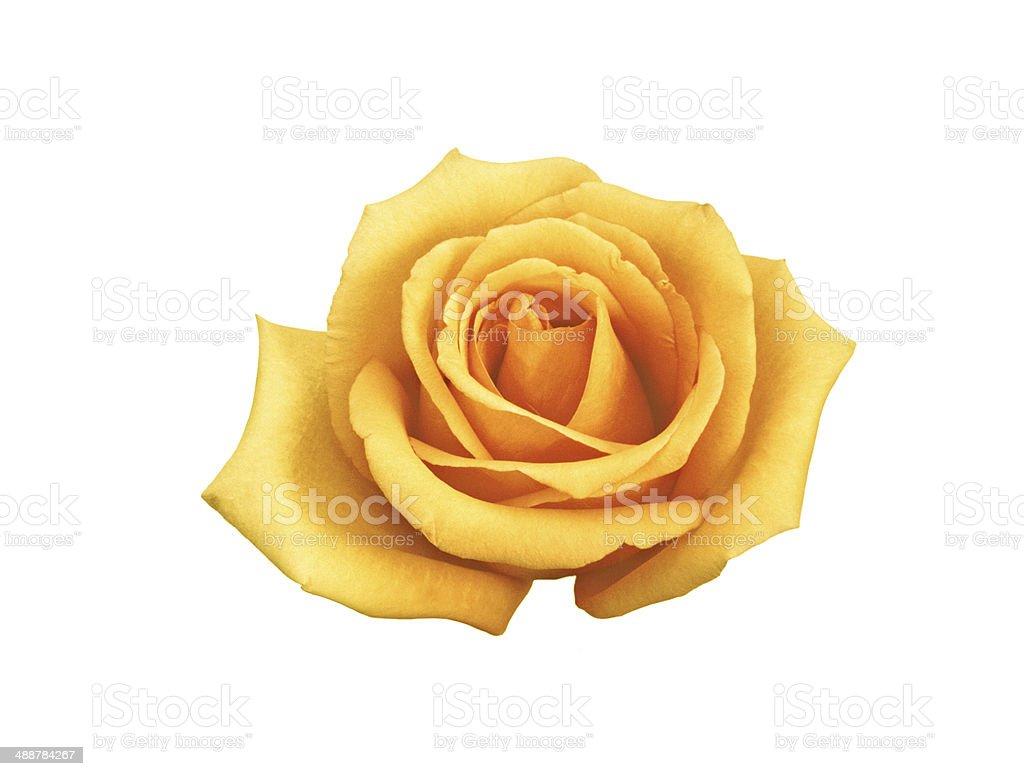 rose buttercream stock photo
