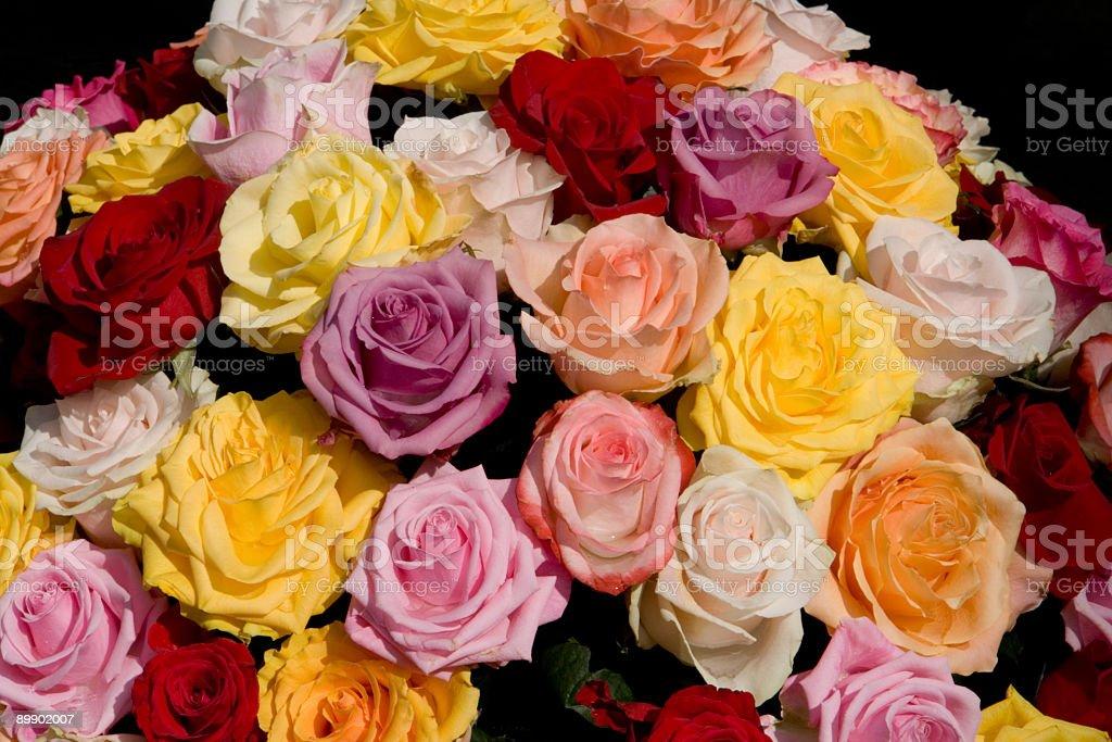 Rose colores de foto de stock libre de derechos