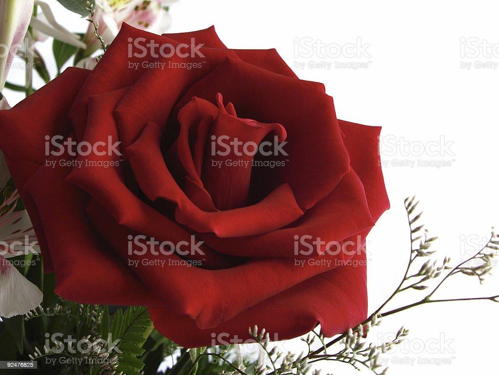 Rose Corner Element royalty-free stock photo