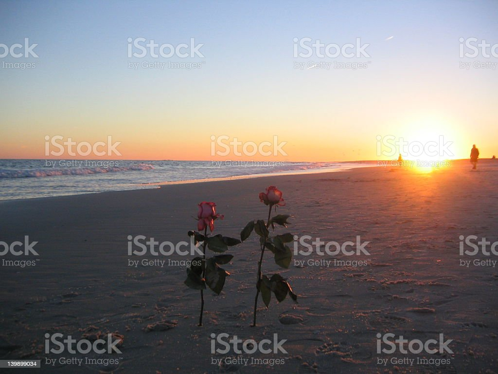 Rose couple watching sunset on beach royalty-free stock photo
